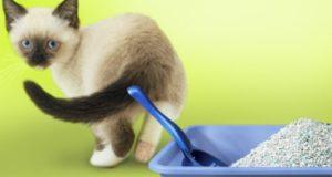 Почему кошка не хочет ходить в лоток