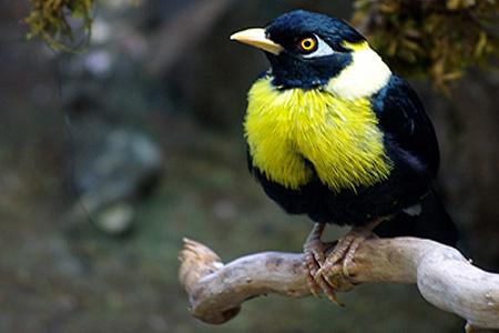 История птиц