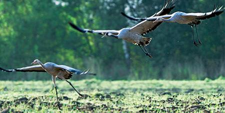 Птичьи сезоны