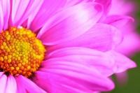Цветы на день студента