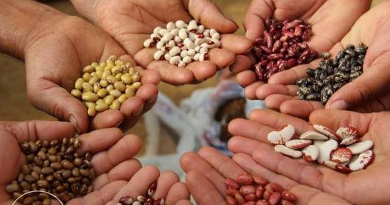Подготовка будущего урожая начинается с выбора качественных семян