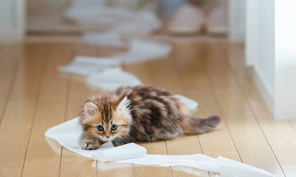 Кошка в доме и необходимый уход за ней