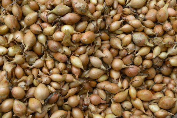 Як вибирати насіння на посів?